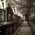 Pitt Rivers Museum - Galleries - (3 of 4)