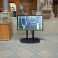 University Museum of Natural History - Gallery spaces - (1 of 5)