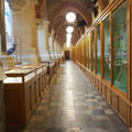University Museum of Natural History - Gallery spaces - (3 of 5)